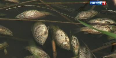 Маныч сильно обмелел, при заморозках обитателям лиманов грозит гибель