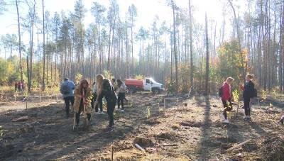 Северный лес в Воронеже восстановят сообща