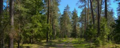 Объем незаконных рубок леса в Иркутской области снизился почти на 19%