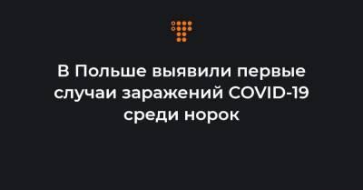 В Польше выявили первые случаи заражений COVID-19 среди норок