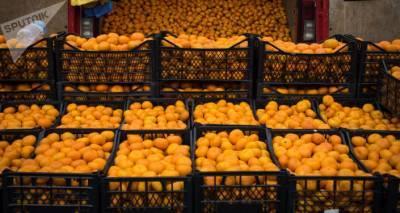 Экспорт грузинских мандаринов увеличился на 22%