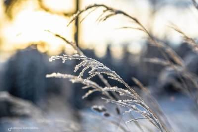 19 января: главные новости дня по версии «МК в Карелии»
