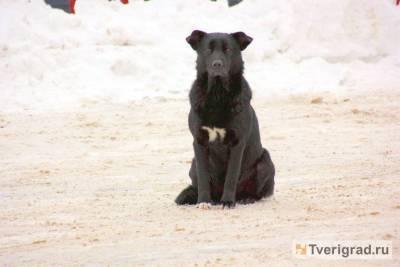 Следователи назначили проверку после нападения собаки на жительницу Конаково