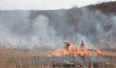 В Московской области произошли первые лесные пожары