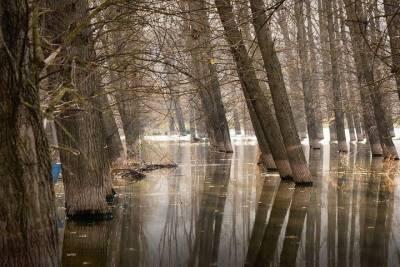 Пристанский лес в Чистополе залило канализационными стоками