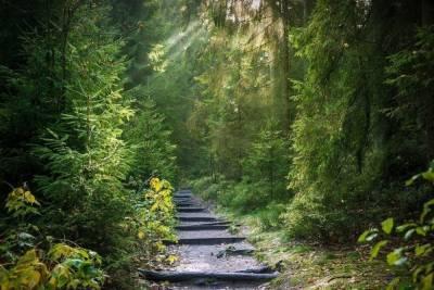 Почти 6 тысяч гектар леса восстановят в Новосибирской области