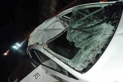 Такси сбило беременную лосиху на Колыванском шоссе под Новосибирском