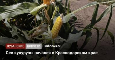 Сев кукурузы начался в Краснодарском крае
