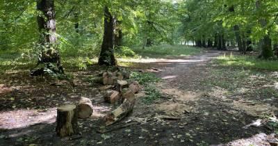 Житель Краснознаменского района получил тяжёлые травмы при обрезке деревьев и умер в больнице