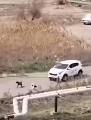 Астраханский следком проверит сообщение о нападении собаки на девочку