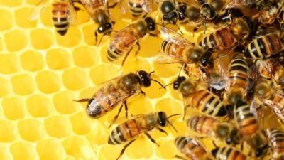 Ученые обнаружили, что жители США ели мед с ядерными отходами времен Холодной войны