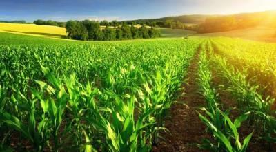 В Азербайджане более 45 тыс. фермерам предоставлены аграрные субсидии