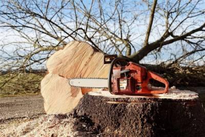 Инженер лесхоза в Бурятии незаконно отвёл под рубку участок леса