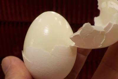 Фермеры не могут работать в ноль: почему снова дорожают мясо птицы и яйца