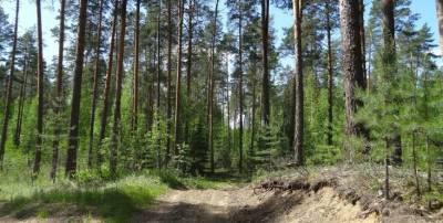 В лесу под Смоленском пропал 76-летний пенсионер Петр Ковалихин